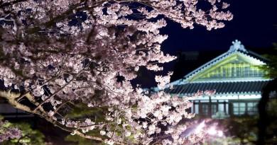 타카마츠 - 리츠린공원 - 봄의 라이트업