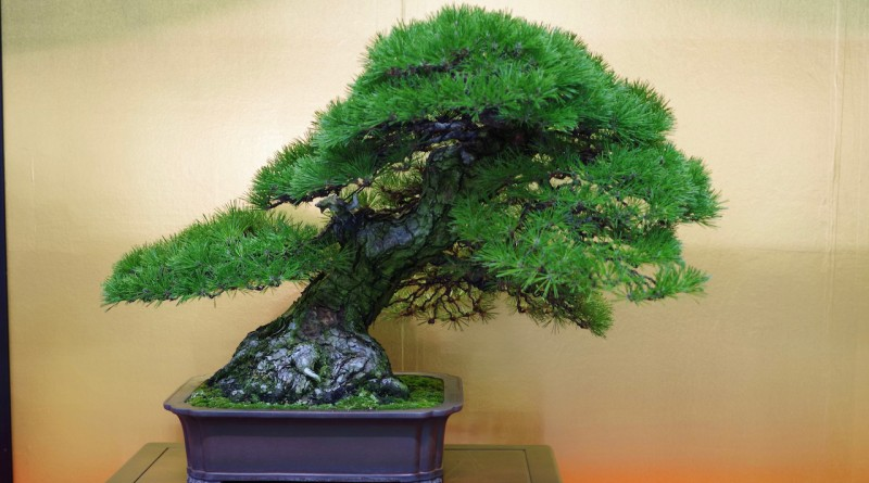 Bonsai at Takamatsu