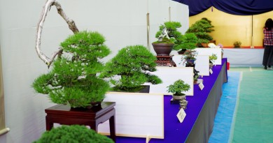 Bonsai exihinition at Kokubunji, Takamatsu