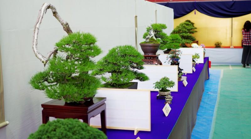 Bonsai exihinition at Kokubunji, Takamatsu