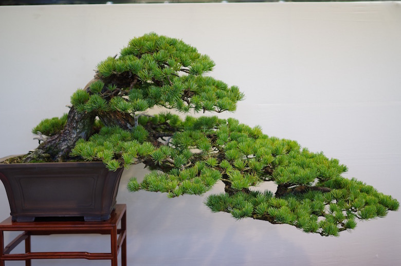 bonsai_cascade1