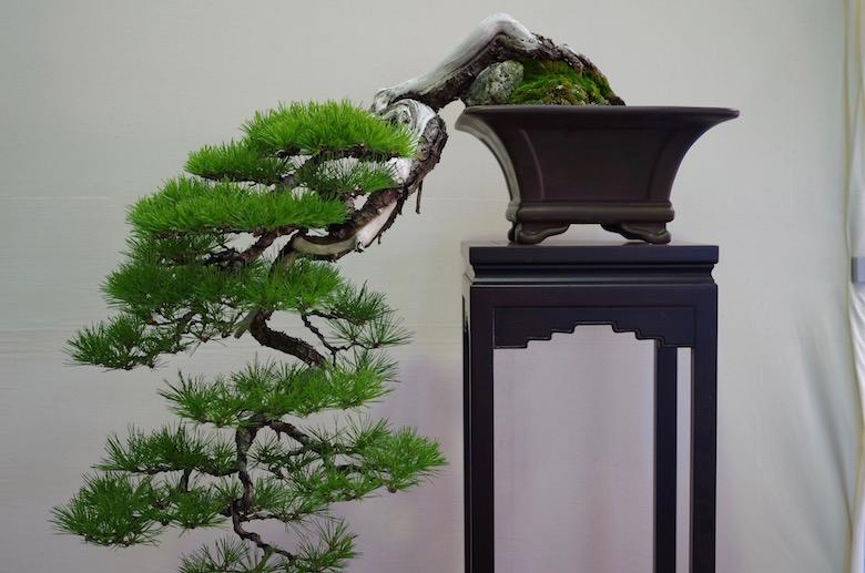 bonsai_cascade2