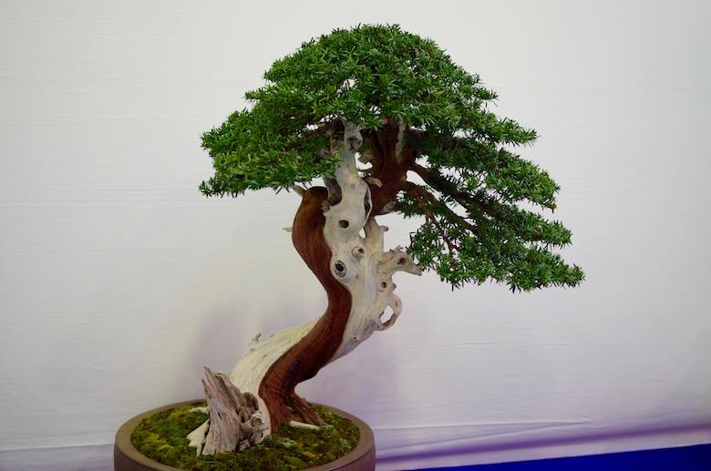 bonsai_dead wood