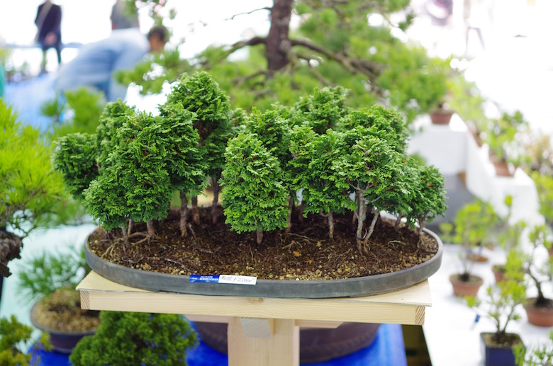 bonsai_forest