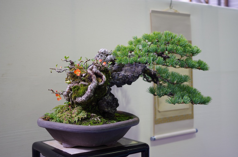 bonsai_windswept1