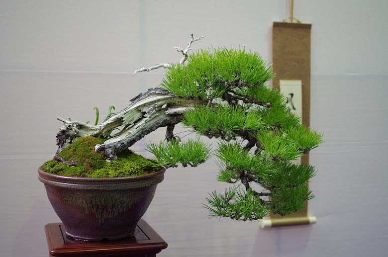 bonsai_windswept2
