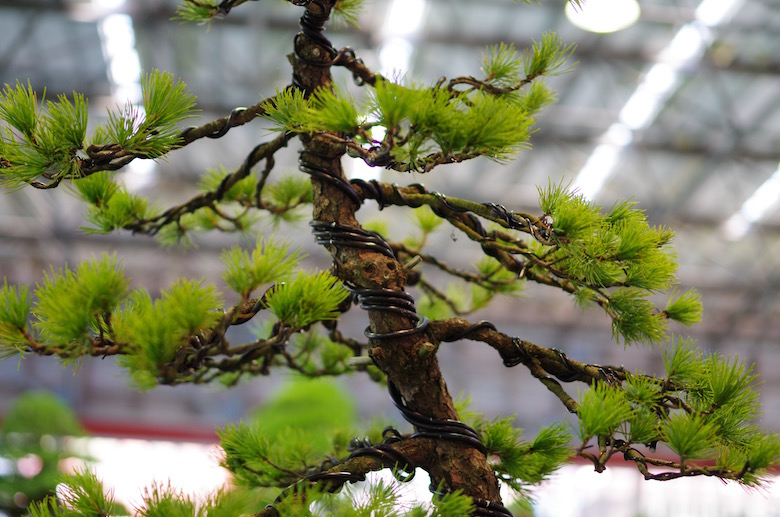 bonsai_wired