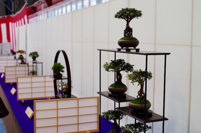 kokubunji_bonsai2
