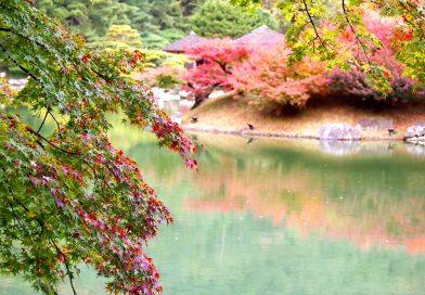 2017 Kagawa's Autumn Leaves Information