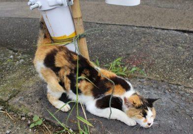 Ibukijima Island – Island of Cats and IRIKO