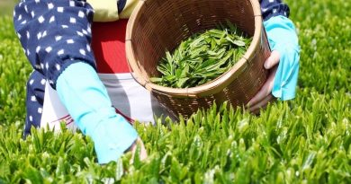 Takase-cha – Kagawa's most famous tea