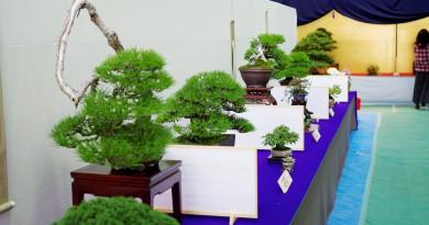 日本盆栽展览 - 国分寺 - 高松