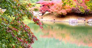 2017年香川赏红叶信息