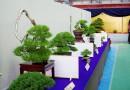 國分寺綠色慶典