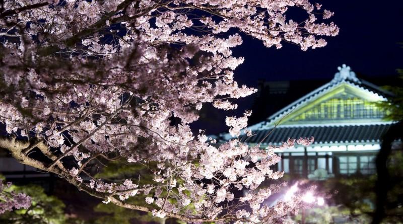 櫻花 -  栗林公園 - 高松的景點