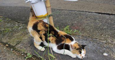 沙丁魚乾與貓咪之島 伊吹島