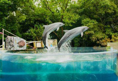 歡笑聲不斷的新屋島水族館